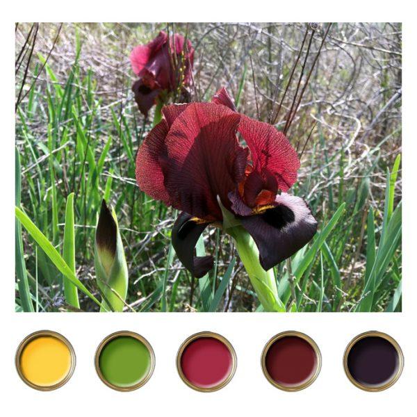 צבע בהשראה של הטבע